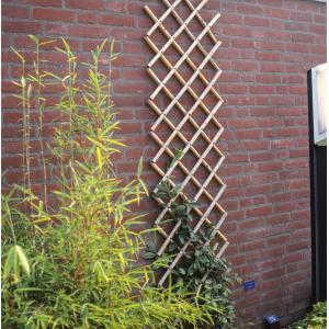 Bamboe plantenklimrek