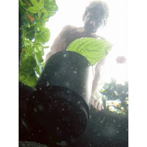 AquaSkim 40 skimmer vijver
